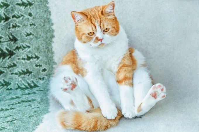 タレント 猫