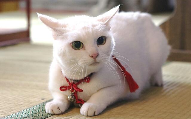 猫 あなご